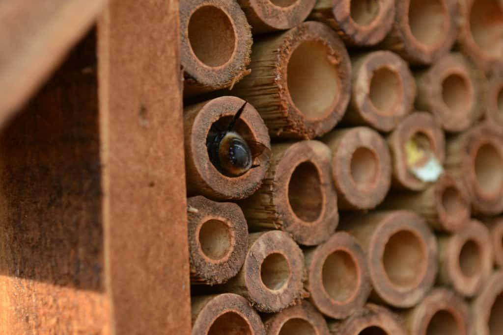 Mason bee in house