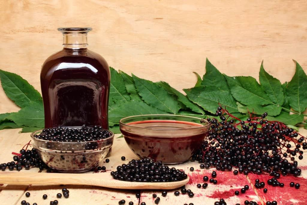 Elderberry Syrup - Gulley Greenhouse