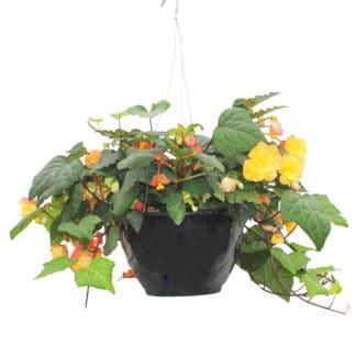 "12"" Hanging Basket Mix for Shade"