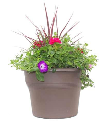 "15"" Flowering Patio Pot for Sun"