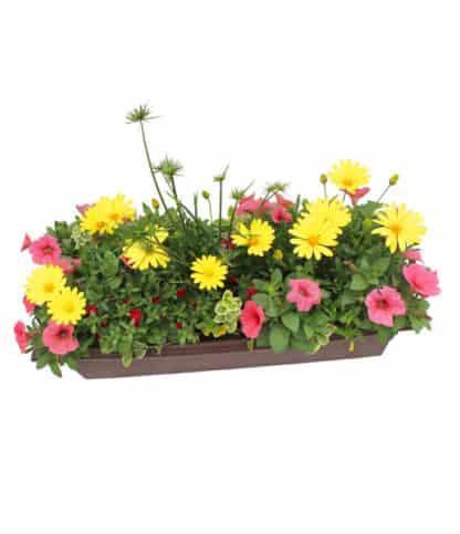 "24"" Flowering Window Box for Sun"