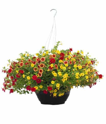 "12"" Hanging Basket Mix for Sun"