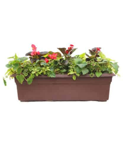 "24"" Flowering Window Box for Shade"