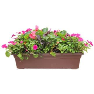"24"" Flowering Window Box for Shade"