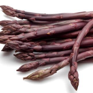 Asparagus 'Purple Passion'