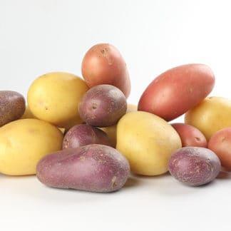 Potato 'Harvest Blend'
