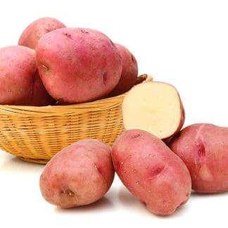 Potato 'Red Norland'