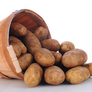 Potato 'Russet Goldrush'