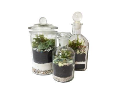 Image of apothecary jar terrariums, class example