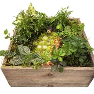 Photo of container garden with hedgehog figurine for class example