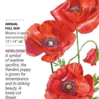 American Legion Corn Poppy seed packet