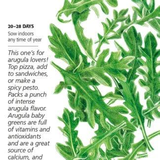 Arugula Baby Greens Seed Packet