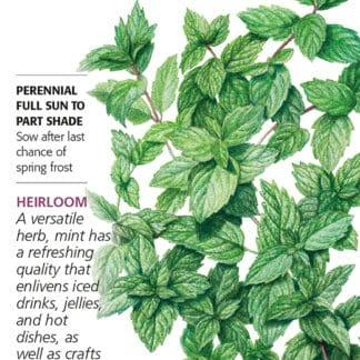 Common Mint seed packet