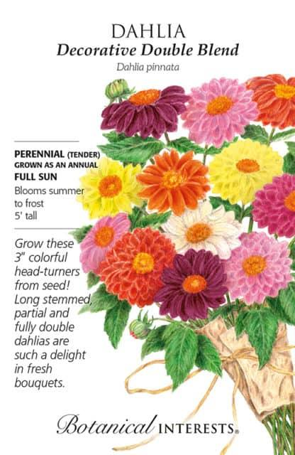Decorative Double Blend Dahlia seed packet