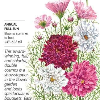 Double Click Blend Cosmos Seed Packet