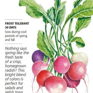 Easter Egg Blend Radish seed packet