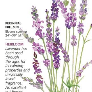 English Tall.Vera Lavender seed packet