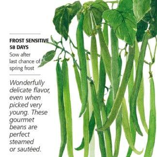 French Filet Bush Bean Seed Packet