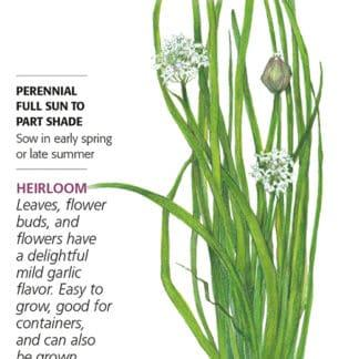 garlic Chives seed packet