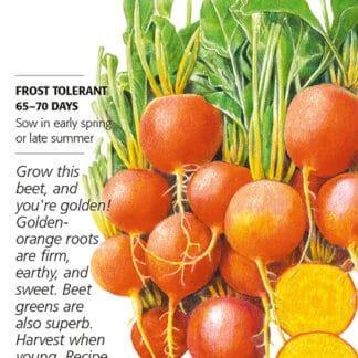 Golden Boy Beet Seed Packet