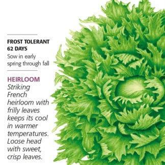 Ice Queen Reine des Glaces Summer Crisp Lettuce seed packet