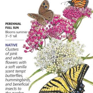 Irresistible Blend Milkweed Butterfly Flower seed packet