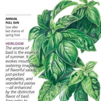 Italian Genovese Basil Seed Packet