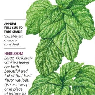Lettuce Leaf Basil Seed Packet