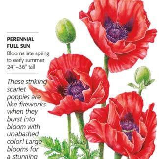 Oriental Brilliant Poppy seed packet