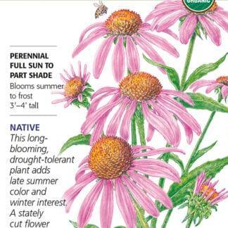Purple Coneflower Echinacea seed packet