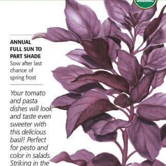 Purple Petra Basil Organic Seed Packet