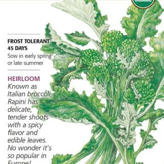 Rapini Broccoli Raab Seed Packet