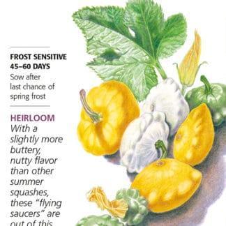 Scallop Blend Summer (Patty Pan) Squash Seeds