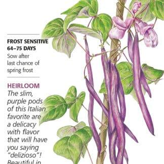 Trionfo Violetto Pole Bean Seed Packet